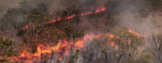 burning land to make room for ranches in Australia increases carbon emissions dramatically