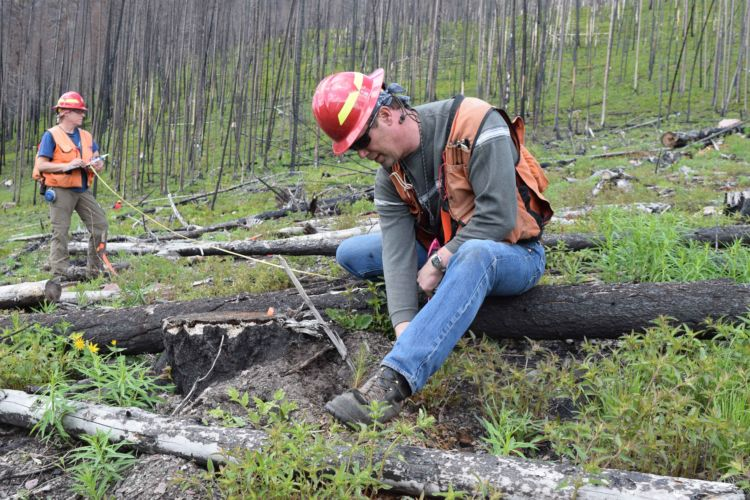 National Forest Foundation   Quinault Division of Natural Resources