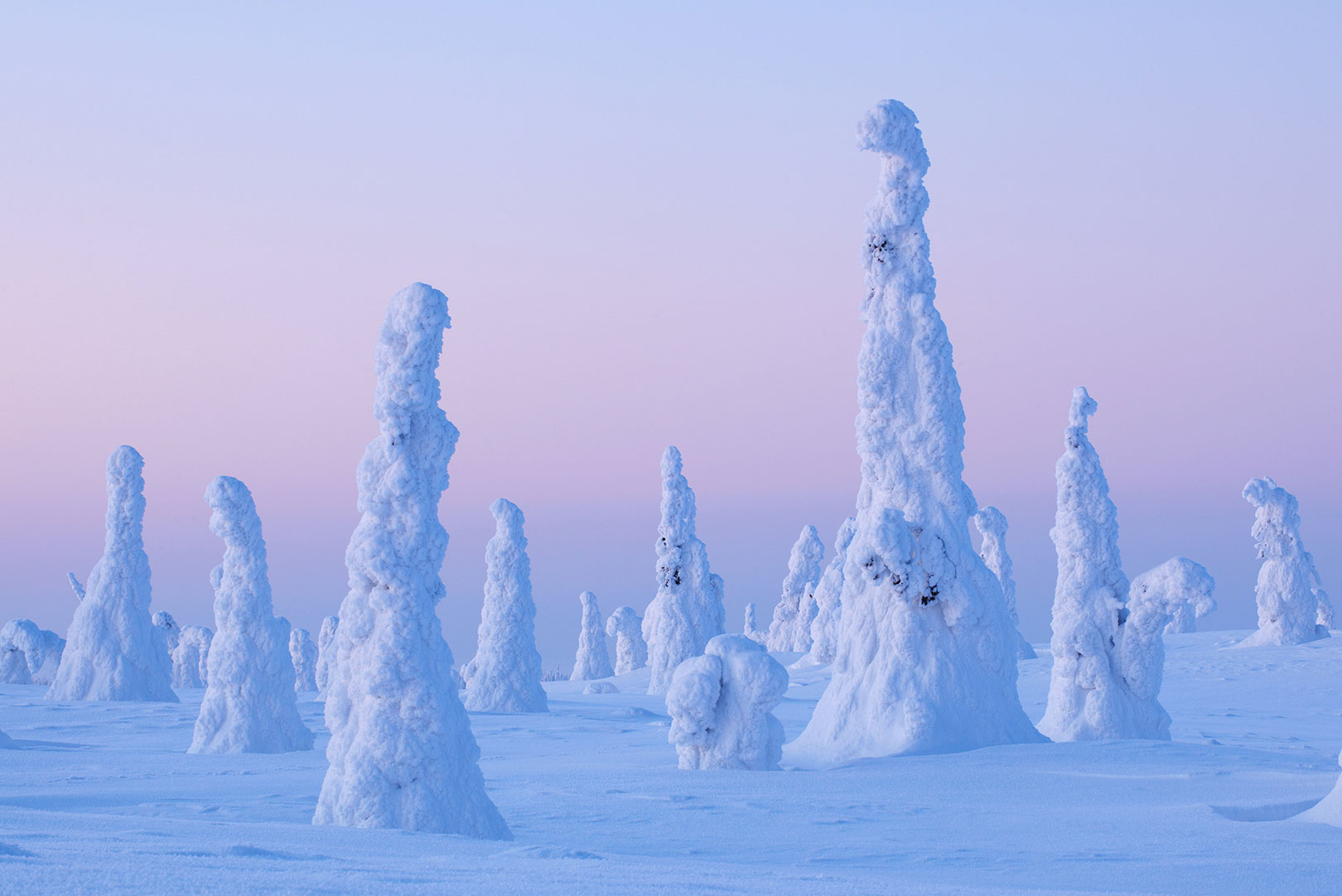 Picture of snow-covered trees in Riisitunturi National Park, Finland