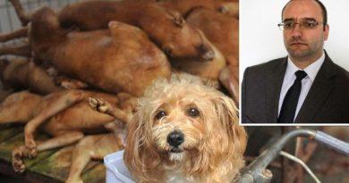 Un grup vietnamezi din Cluj au rapit, ucis si mancat un caine maidanez! Nu este o gluma!