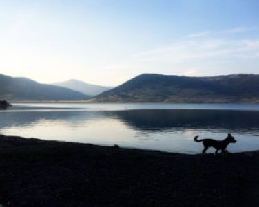 camping at yellowstone national park with dogs