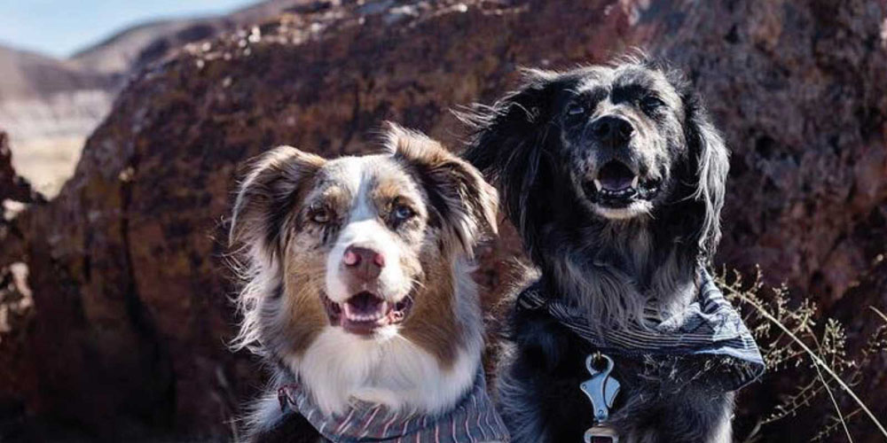 Petrified Forest National Park visited by @woofwagwander
