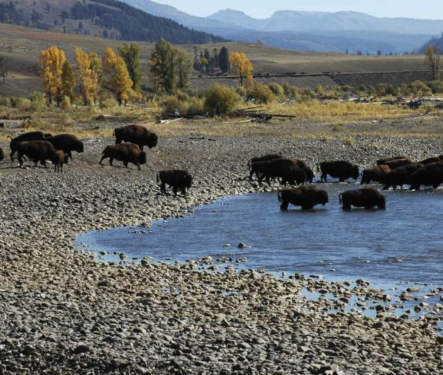 Yellowstone National Park Americas First National Park National Park Foundation