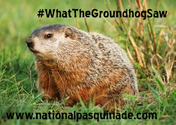 #WhatTheGroundhogSaw