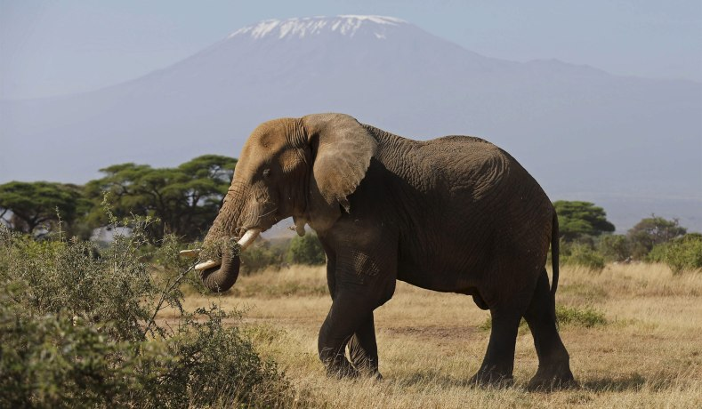 An Elephant At The Amboseli National Park In Kenya Reuters Photo Thomas Mukoya Trophy Hunting