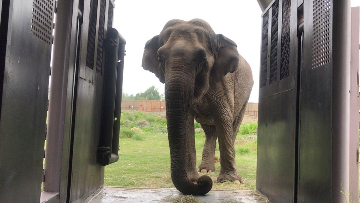 "Judge Wishes She Could Rule Elephant a ""Person"" 