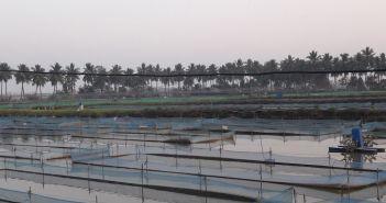 Fisheries skills blue revolution