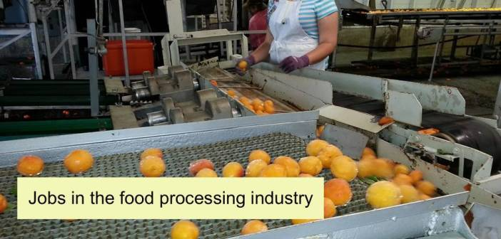 Jobs in the food processing industry