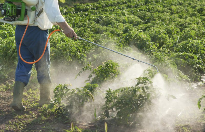 Illegal Herbicide Use on GMO Crops Causing Massive Damage to