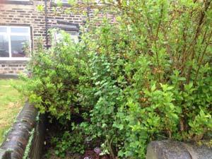 Newcastle Garden Clearance & Garden Tidy Up