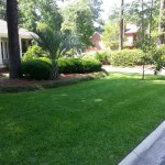 Nice Green Fertilized Lawn