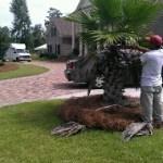 Palm Pruning Savannah Georgia