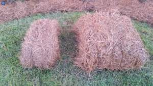 regular-bale-of-pine-straw-compared-to-fornido-bale-of-pine-straw
