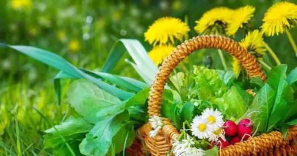Le erbe selvatiche da raccogliere in inverno
