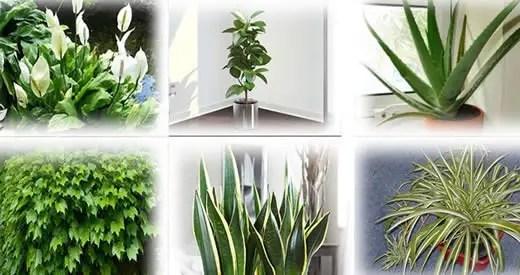 Le migliori piante per purificare l'ambiente in casa