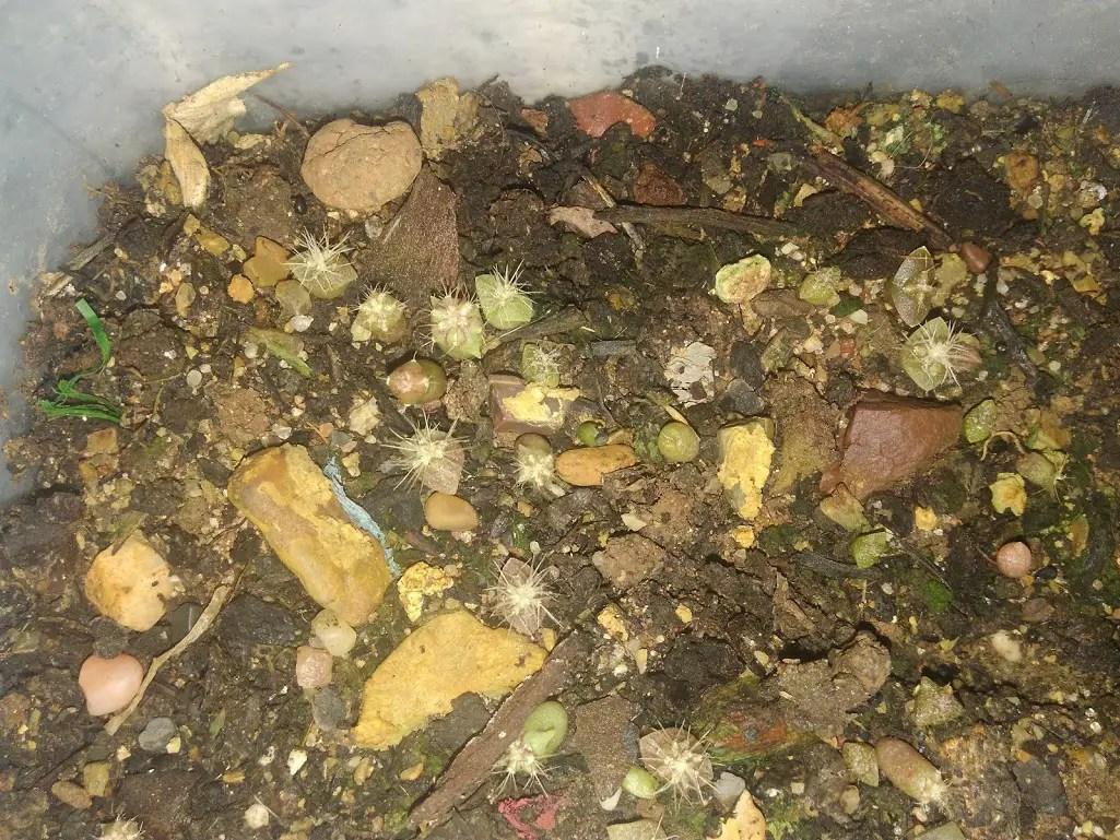 Piante Grasse Da Giardino piante grasse da una bustina di semi da 0,90 euro - nati per