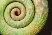 piante-geometriche-in-natura-08