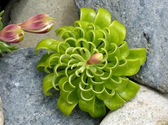 piante-geometriche-in-natura-12