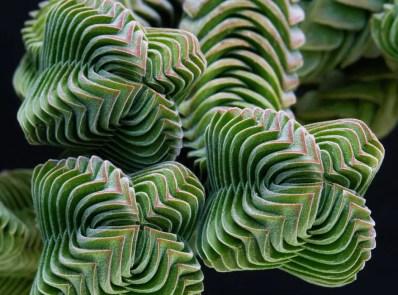 piante-geometriche-in-natura-17