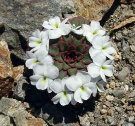 piante-geometriche-in-natura-35