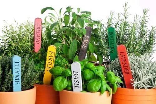 Le piante aromatiche e medicinali per orto e vaso