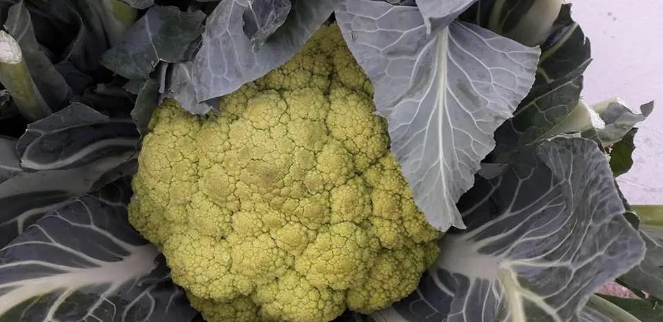 Zuppa di cavolfiore o broccolo verde
