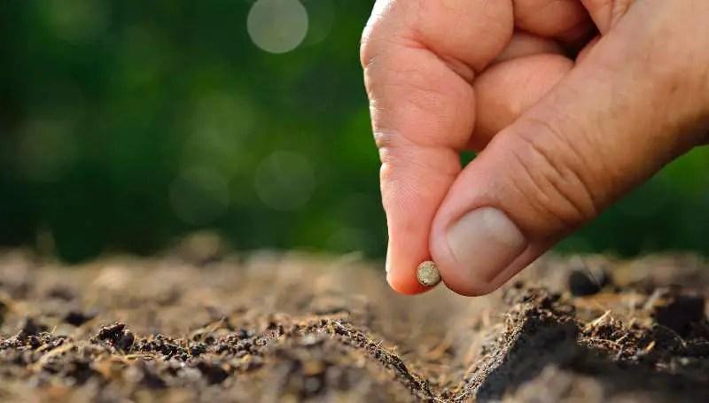 L'antico semenzaio da riscoprire