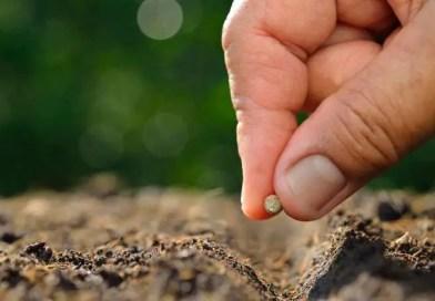 La concimazione è fondamentale per gli orti
