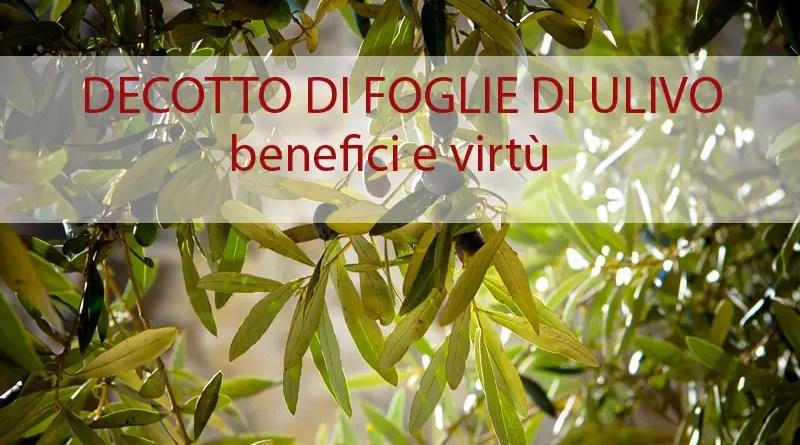 Decotto di foglie di ulivo per combattere l'ipertensione