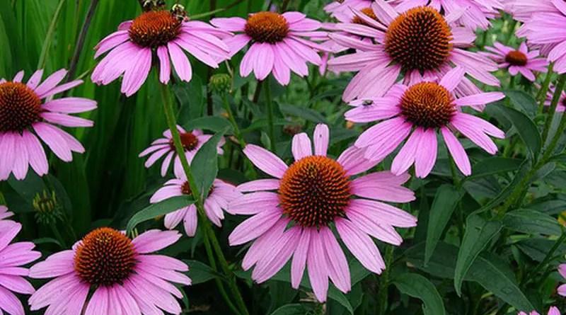 Sei fiori da coltivare per creare il tuo slow flower