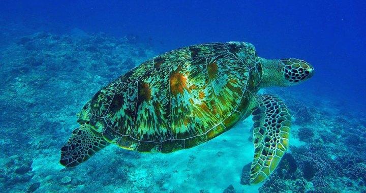Los mejores puntos de inmersión en Sulawesi