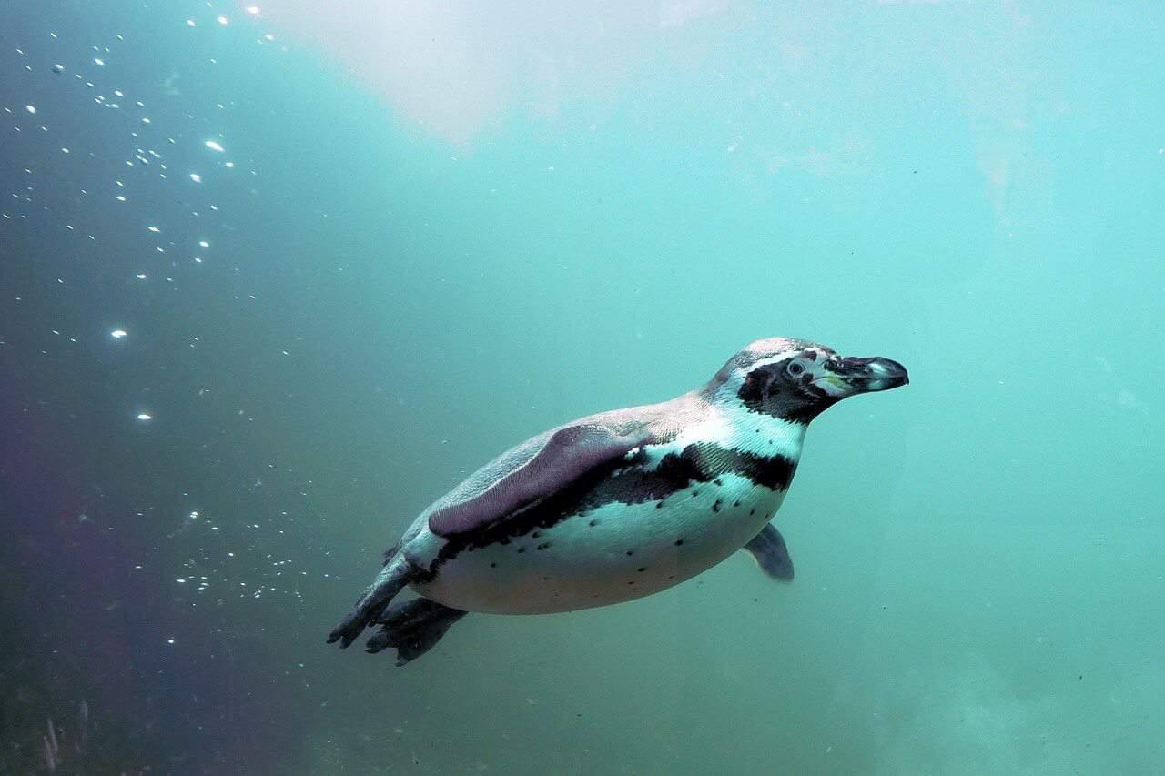 albuquerque zoo penguins