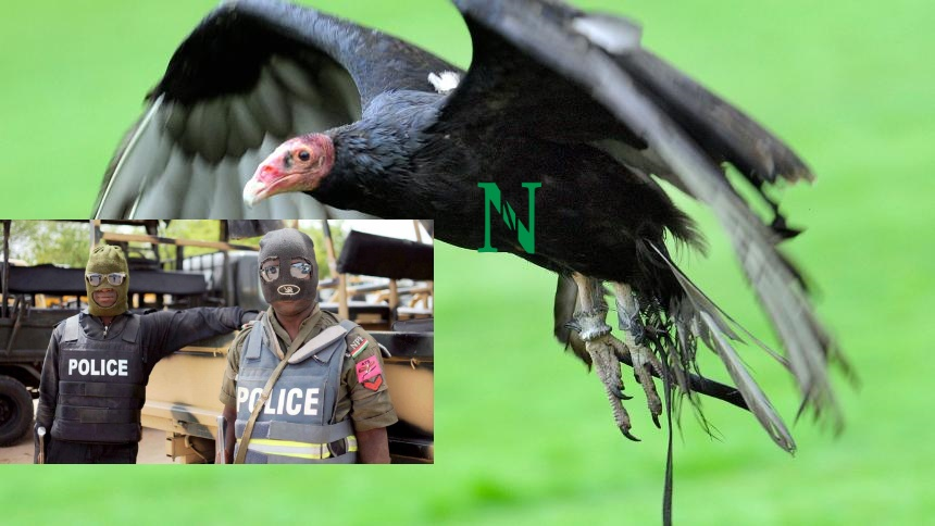 Detained Vulture In Adamawa Eats N30,000 In 6 Days - Police