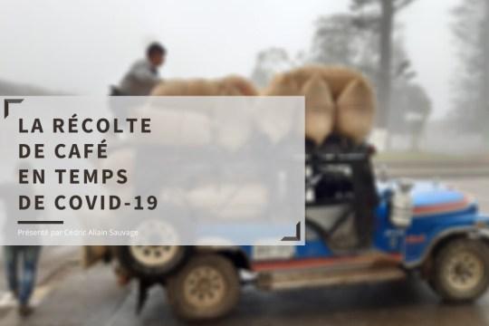 Récolte du café en Colombie en pleine pandémie Covid-19