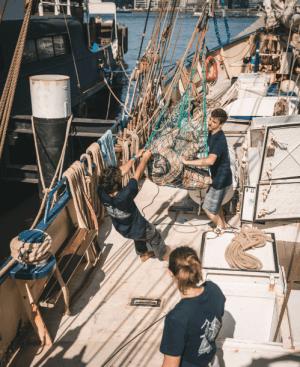 Chargement des sacs de café à bord du voilier