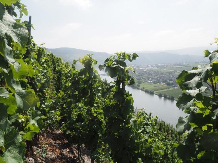 Utsikt fra vinmarkene til A.J. Adam