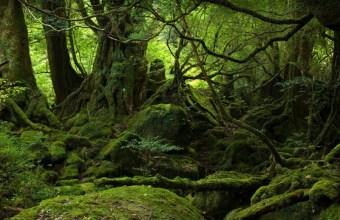 Le foreste pluviali, quaranta tipi differenti