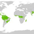 foresta pluviale