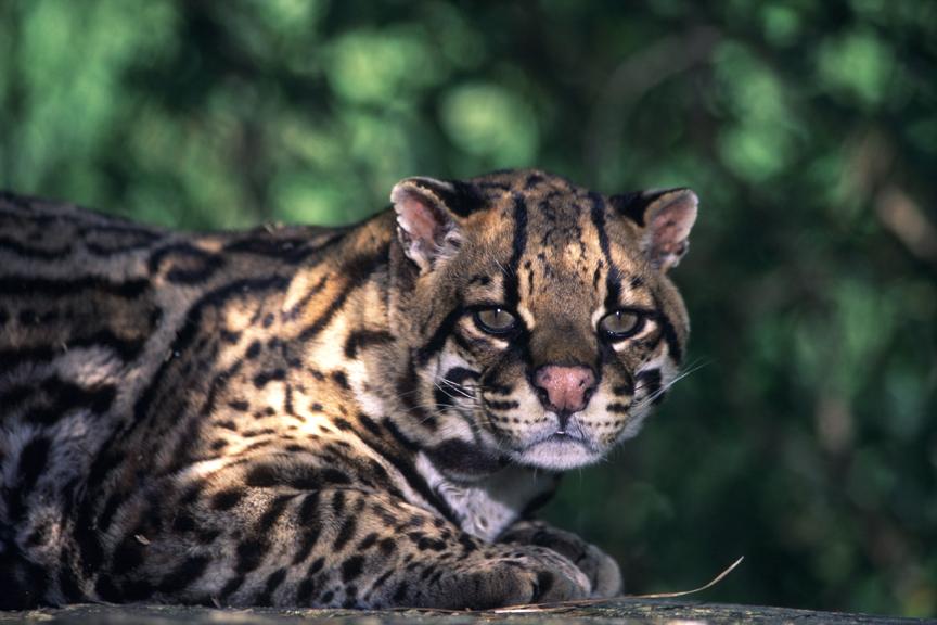 Gli animali nelle foreste pluviali natura e animali - Gli animali della foresta pluviale di daintree ...