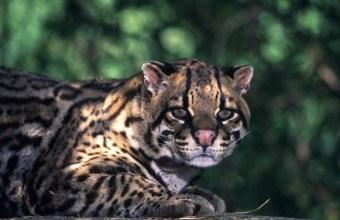Gli animali nelle foreste pluviali