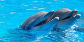 Il delfino, mammifero intelligente e simpaticissimo