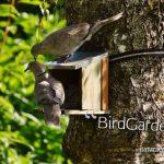 BirdGardening, ecco come creare un giardino antistress
