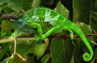 Camouflage in natura, animali che lo usano