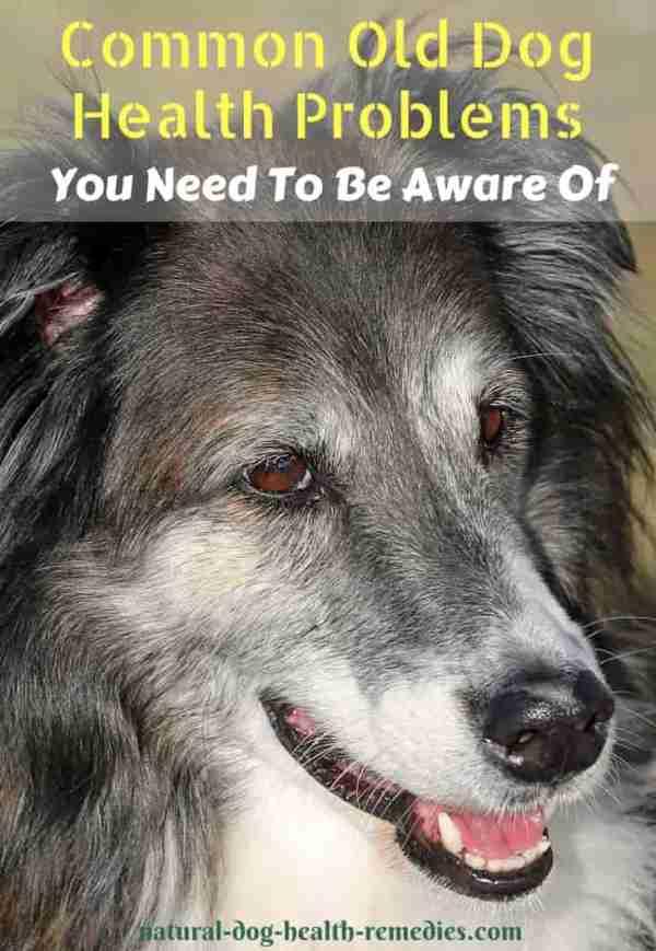 Old Dog Health Problems