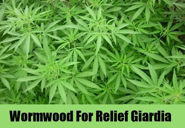 Wormwood For Relief Giardia
