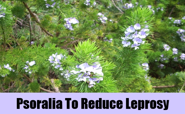 Psoralia To Reduce Leprosy