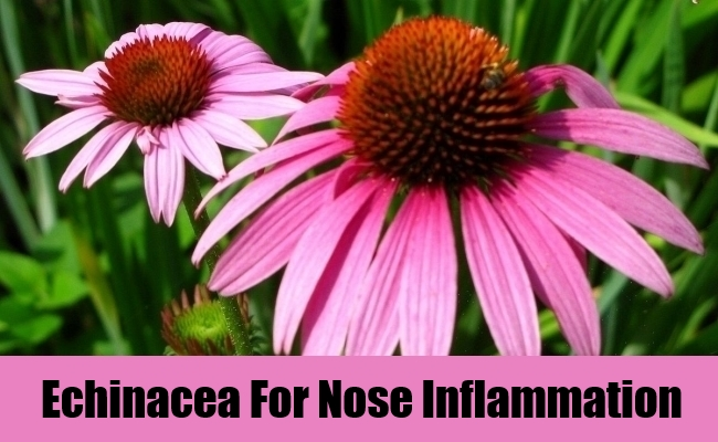 Echinacea For Nose Inflammation