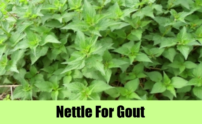 Nettle For Gout