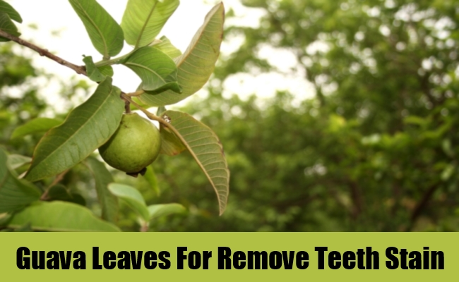 Guava Leaves For Remove Teeth Stain