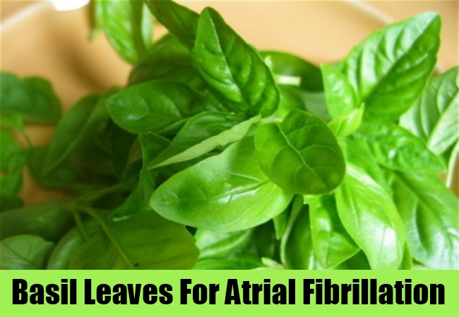 Basil Leaves For Atrial Fibrillation